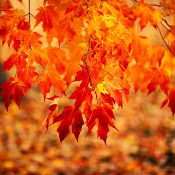 essay about autumn season for kids